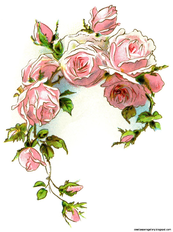 Vintage Pink Rose Clipart