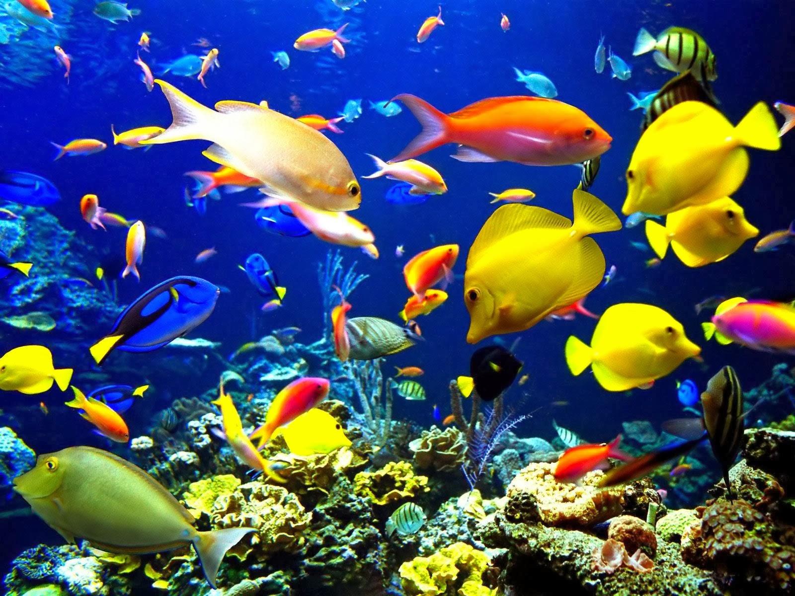 Aquarium wallpaper free beautiful desktop wallpapers 2014 for Beautiful tropical fish