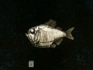 Small silver prehistoric fish - looks like tiny pirhana