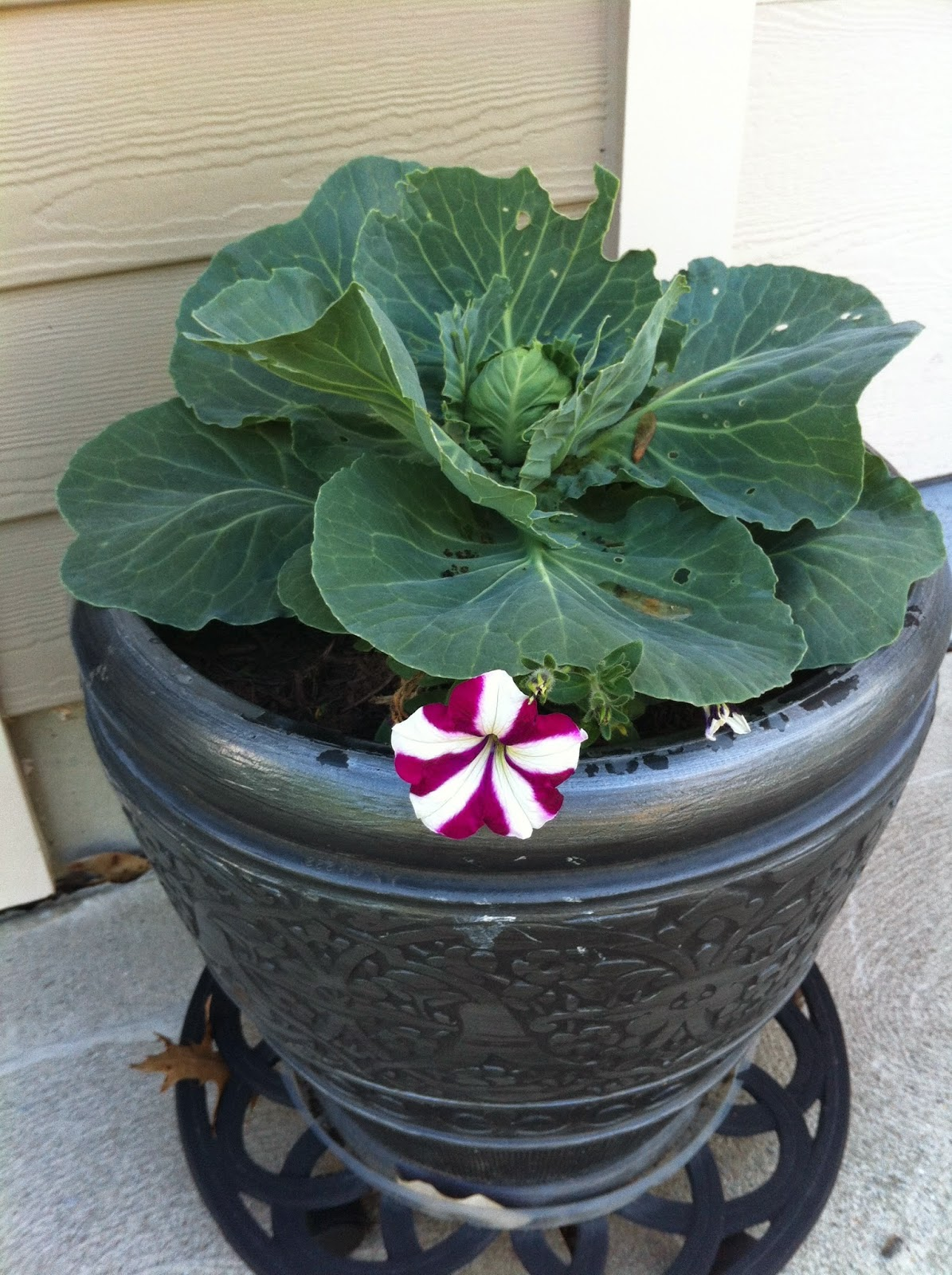 victory garden on the golf course  decorative container