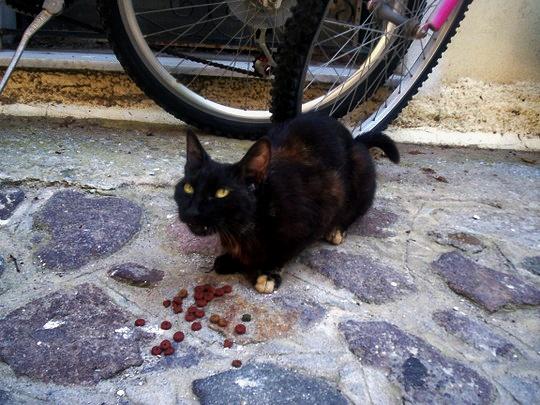 Cat from Petra, Lesbos