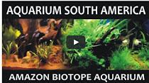 VIDEO -  AMAZONIA