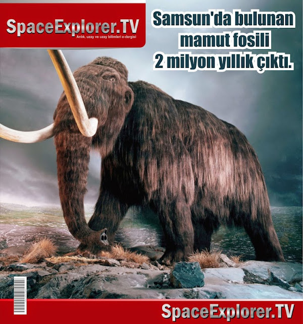 arkeoloji, Evrim aldatmacası, Fosiller, Mamutlar, Nesli tükenen hayvanlar, Tabiat Tarihi Müzesi, Türkiye,
