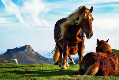 Caballos charlando muy cerca de las montañas - Horses and mountains