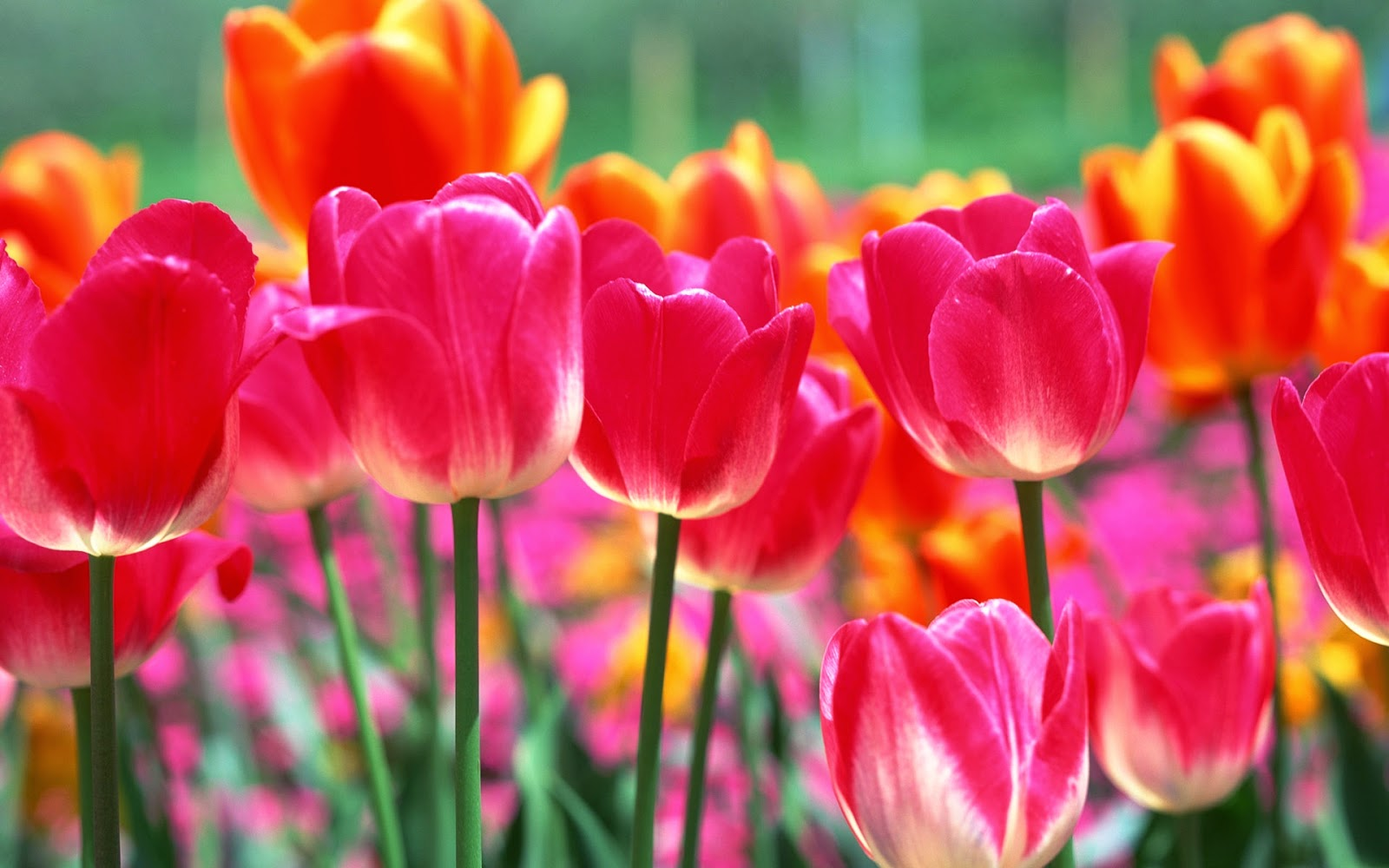 Beautiful Spring Flowers Wallpapers Beautiful Flowers Wallpapers
