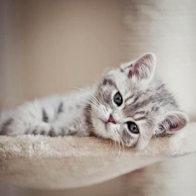 kucing galau wallpaper