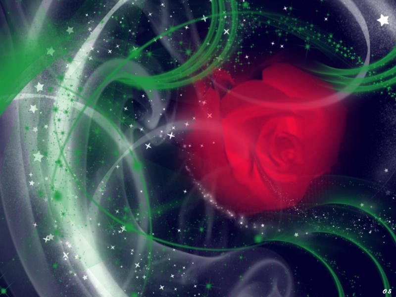 роза, ночь