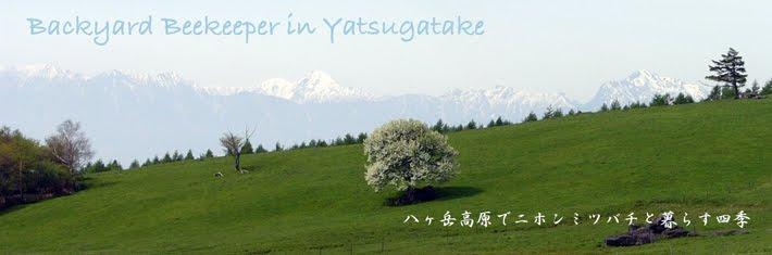 八ヶ岳高原で日本ミツバチと暮らす四季