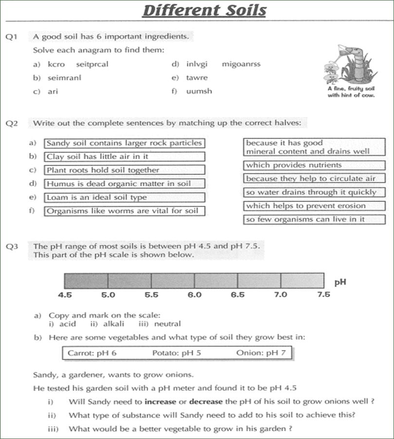 Homework help year 8