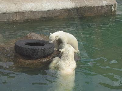 Медведица играет с медвежонком