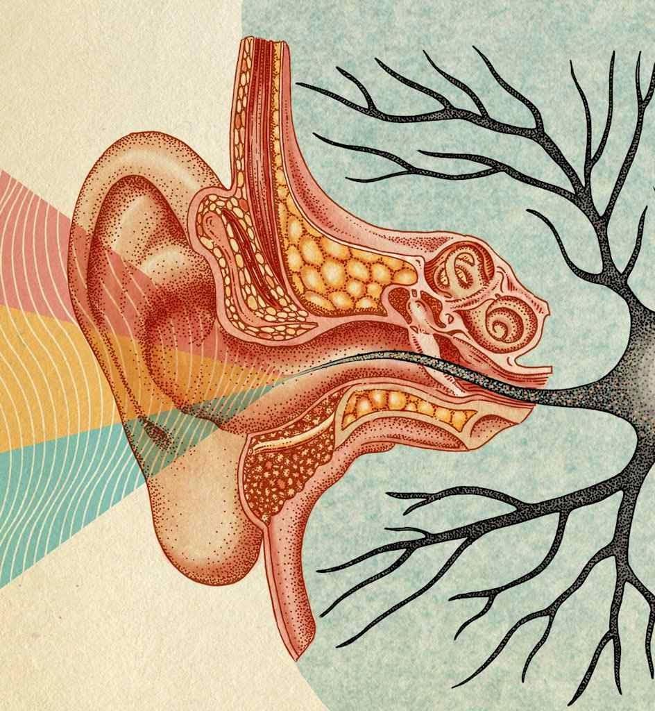 As células sensoriais e outras estruturas podem ser danificadas permanentemente, advertiu a OMS