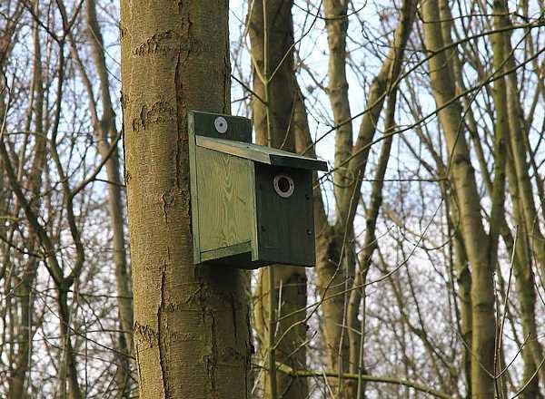 Las cajas anideras de pájaros