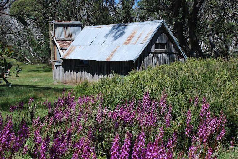 Trigger flowers and Wallaces Hut