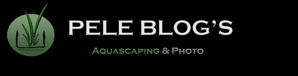 Pele Blog's