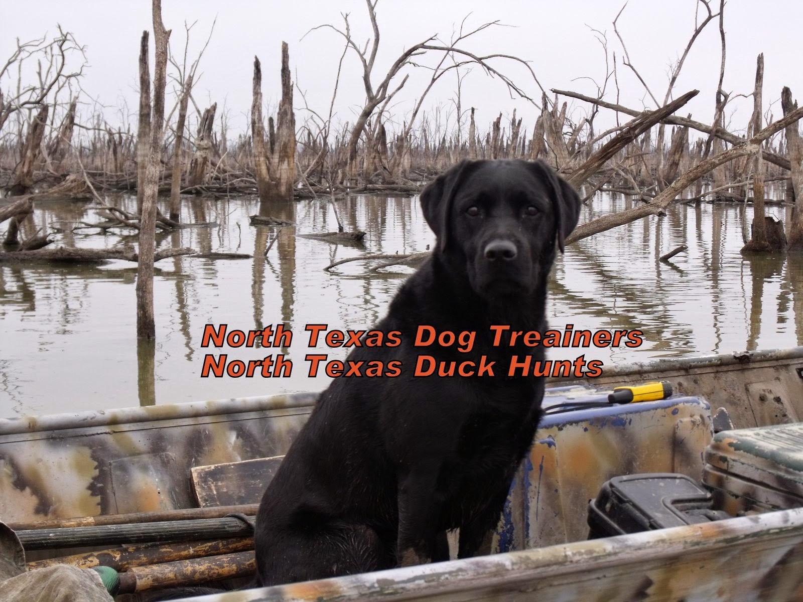 North Texas Duck Hunts