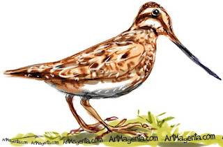Common Snipe is a bird drawing by artist and illustrator Artmagenta
