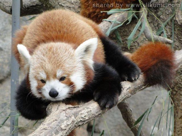 http://3.bp.blogspot.com/-OUEmHYu24AY/TXhGivgCVJI/AAAAAAAAQhY/deA3Eb3evlI/s1600/these_funny_animals_632_640_31.jpg