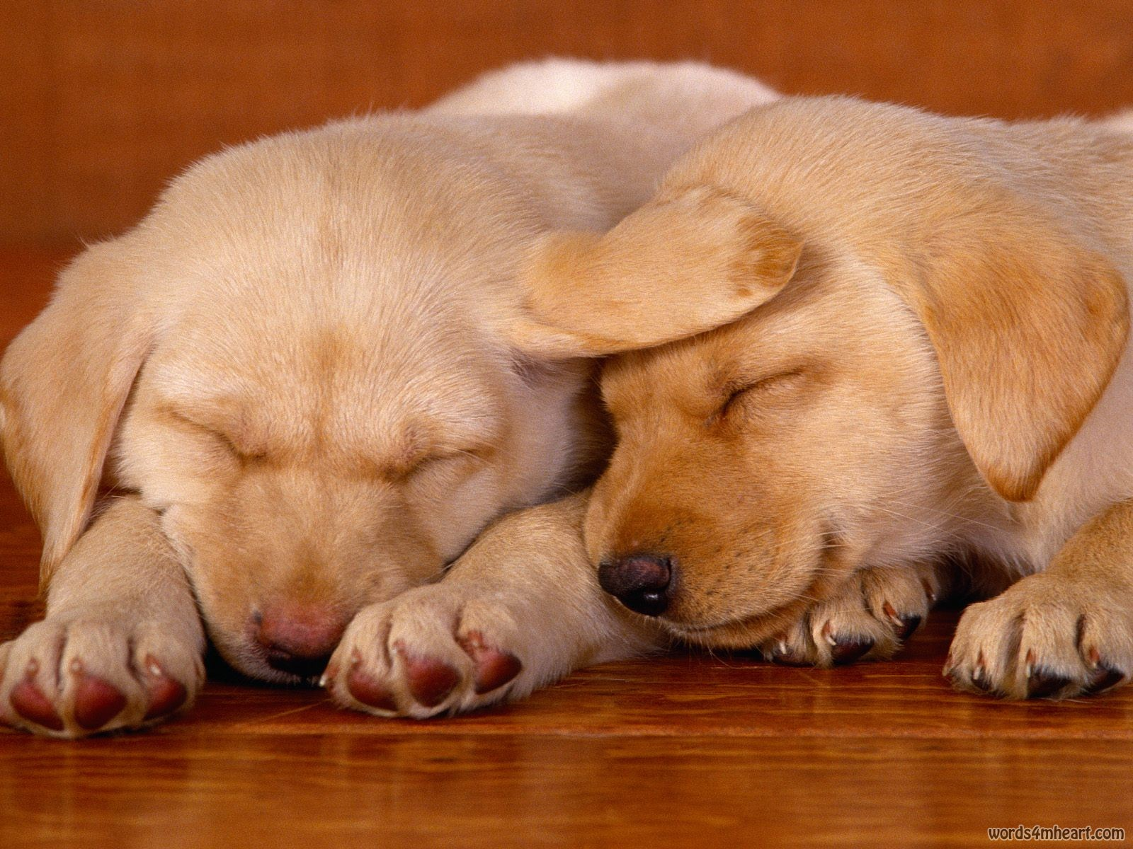 Animals Zoo Park: 8 Cute Puppies Wallpapers, Cute Puppy Wallpapers for Desktop