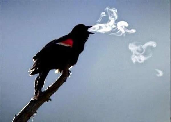 pajaro haciendo anillos de humo