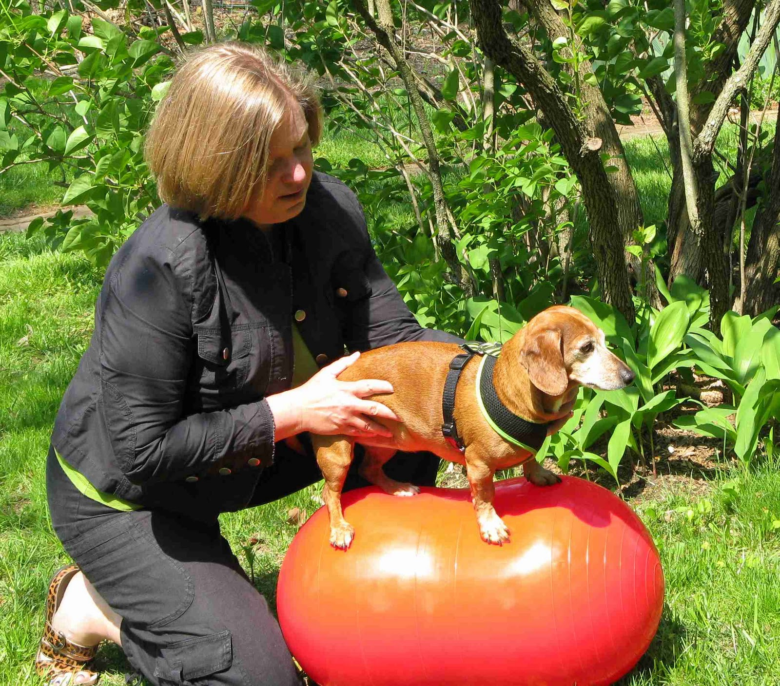 Canine physical therapy - Physical Therapy In The Veterinary World