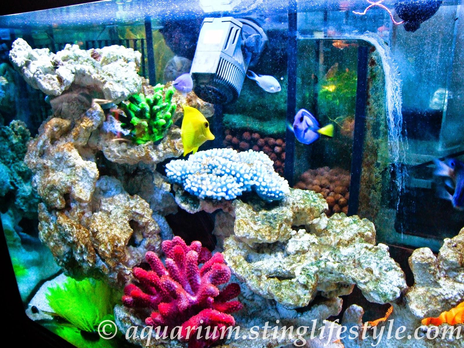 Saltwater Aquarium Setup Marine Aquarium Setup Caroldoey