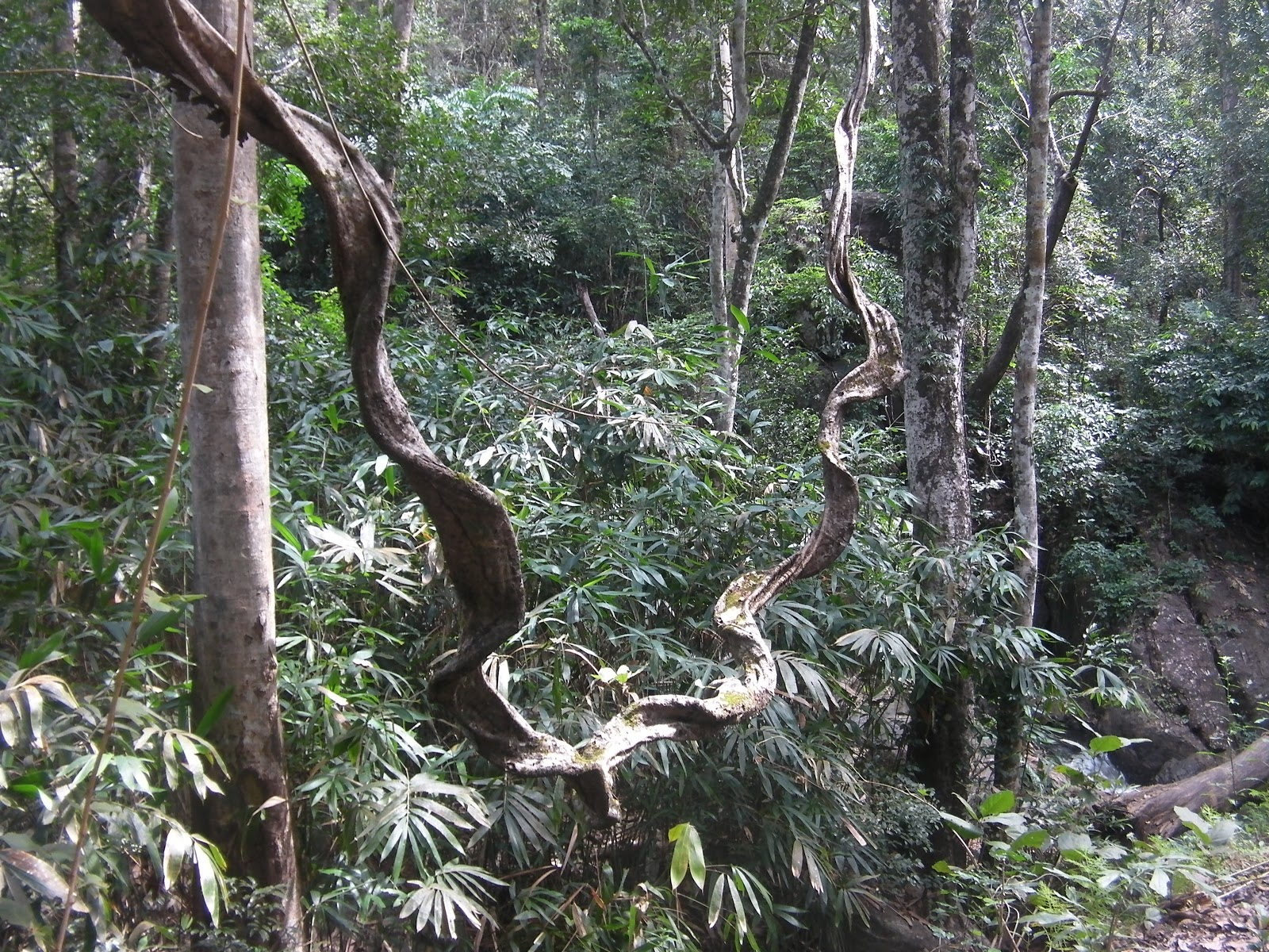 Biological Diversity Wallpaper The Forests in Kerala in The
