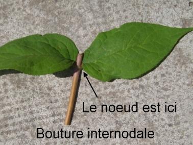 Le jardin de pascaline bouturer le deutzia essai n 3 - Bouture de l hibiscus de jardin ...