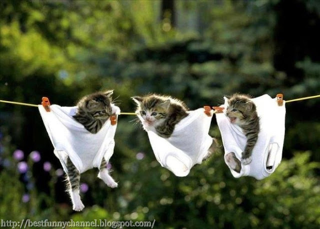 Very funny kittens