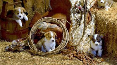 littele-little-cuty-puppies-wallpaperss