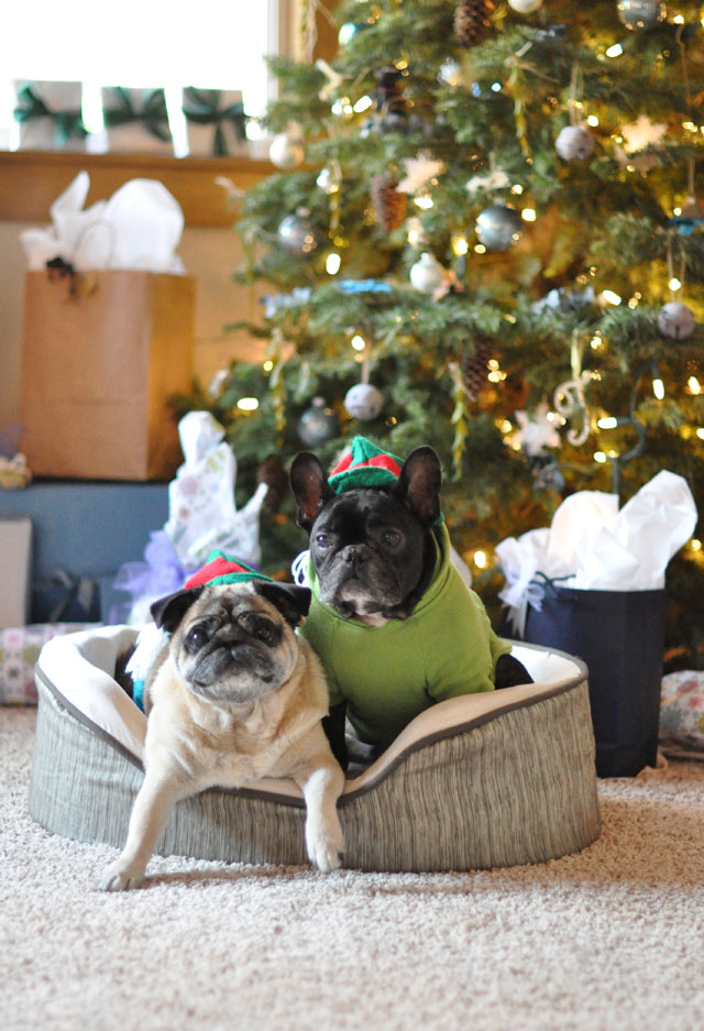 christmas pug and frenchie elves