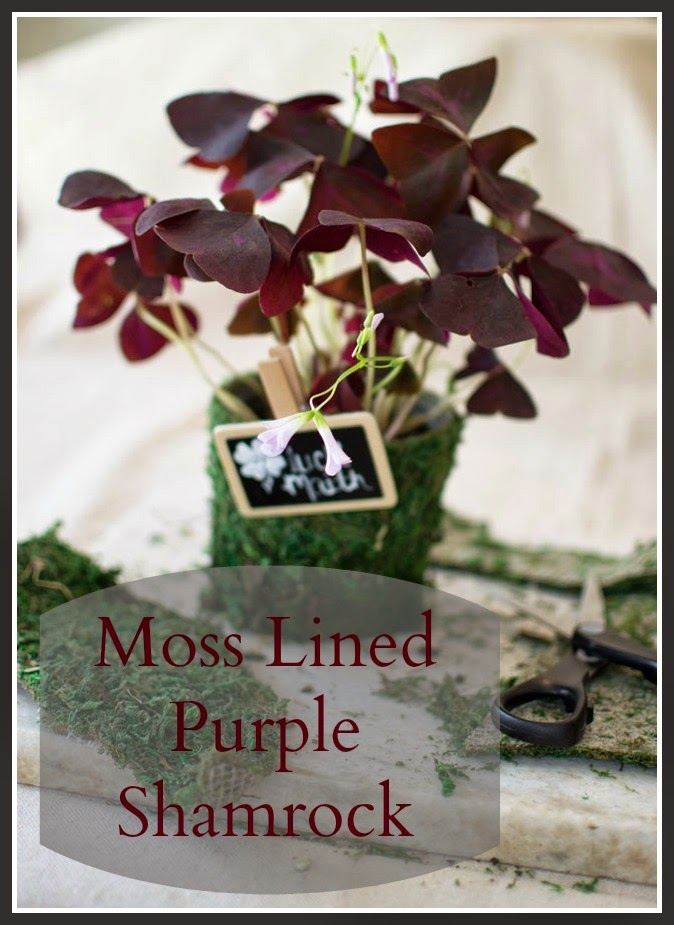 moss lined purple shamrock via homeologymodernvintage.com