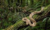 Fotografías de serpientes, vívoras, culebras y ofidios