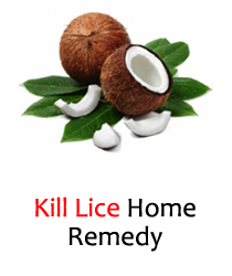 how to kill nits home remedy