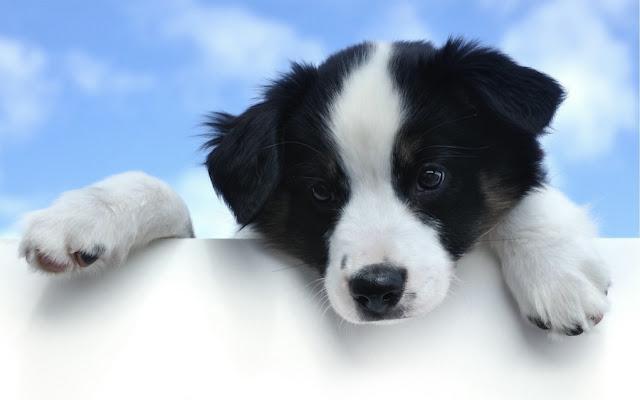 Красивые фотографии щенят
