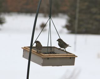 photo of unknown birds at feeder