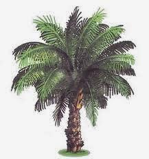 Gambar1. Pohon kelapa Sawit (12)
