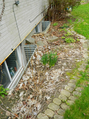 Graydon garden cleanup before by Paul Jung Gardening Services Toronto