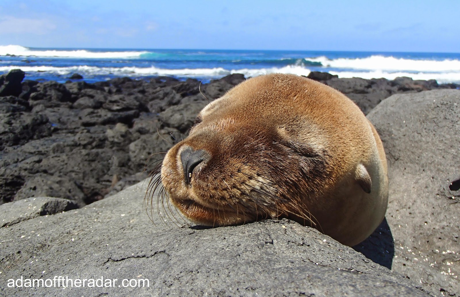 amazing animals in the galapagos