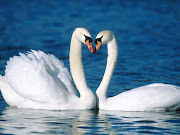 Animal Love Wallpaper (cute birds are in love images)