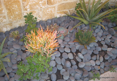 Succulent Zen Garden