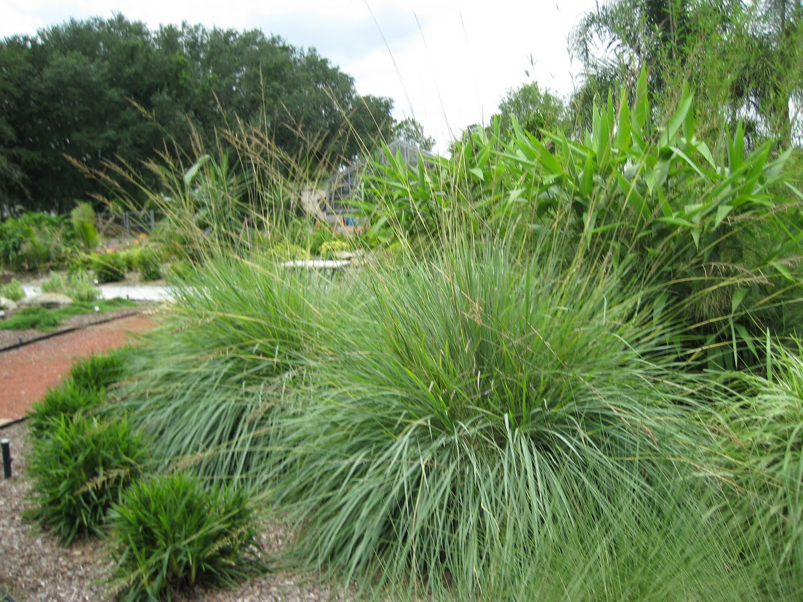 How to grow ornamental grasses urbangardening for Ornamental grasses that bloom