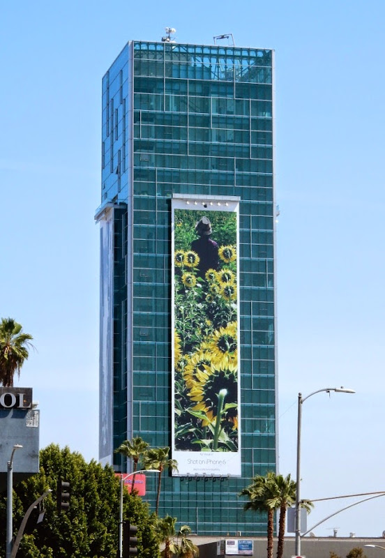 Shot on iPhone 6 sunflowers billboard