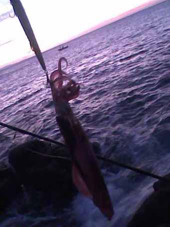 El Último Calamar de Costa_Febrero/12