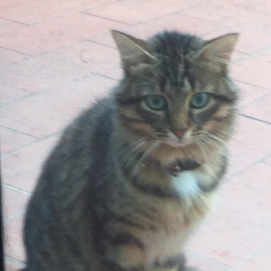 Animali persi e trovati in toscana 2013 11 03 for Gatto che starnutisce
