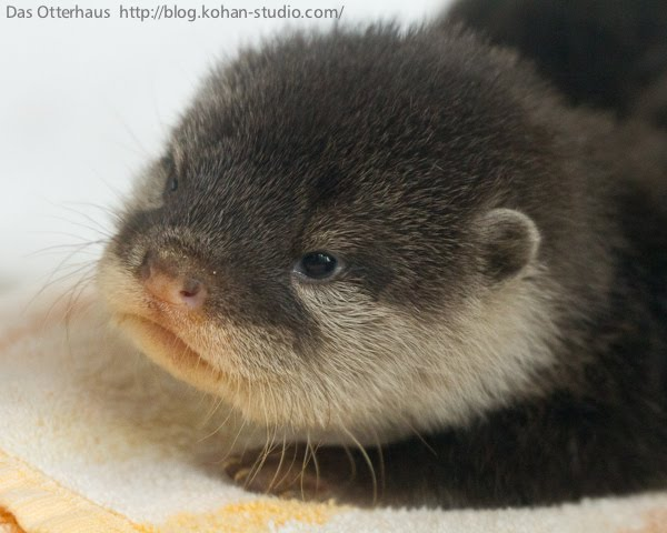 cute-baby-otter-pictures-003.jpg