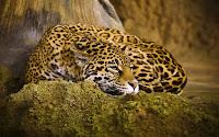 La ultima frontera del Jaguar