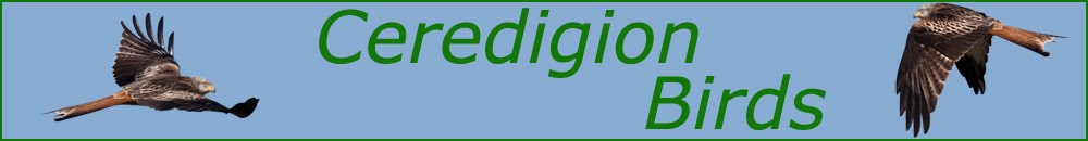 Ceredigion Birds