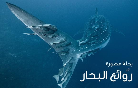 مجموعة صور رائعة من أعماق البحار للمصور ألكساندر سافونوف Alexander Safonov