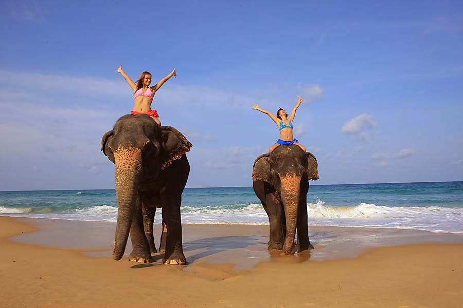 Девушки на слонах