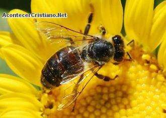 Disminución de abejas podría adelantar el fin del mundo